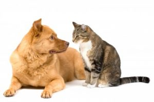 hypoallergenic dogs & cats - hay fever remedies and hayfever solutions